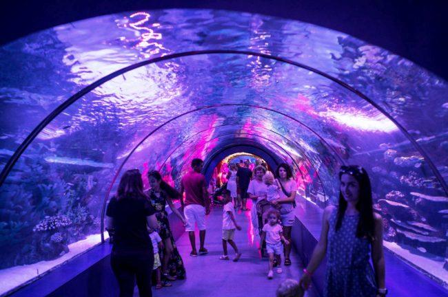 Aquarium to replace former Lord & Taylor store at Galleria ...